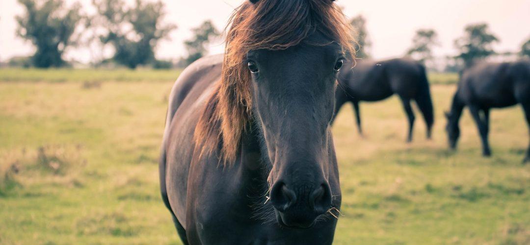 horse-3634915_1280